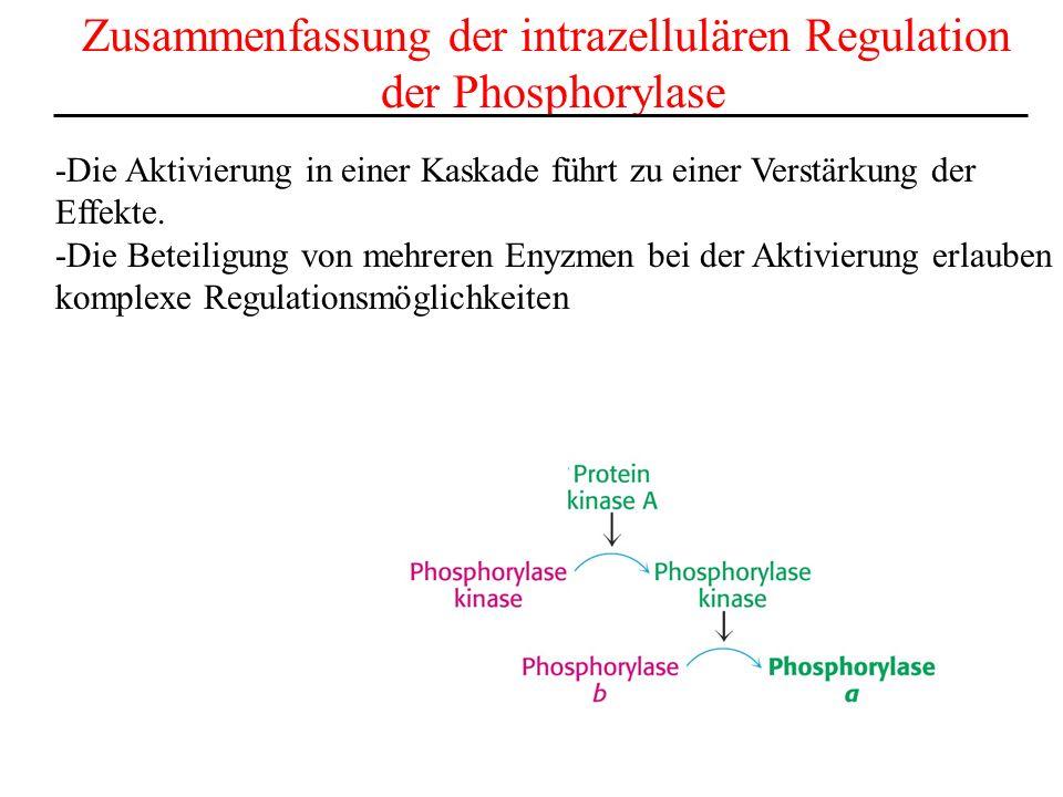 Zusammenfassung der intrazellulären Regulation