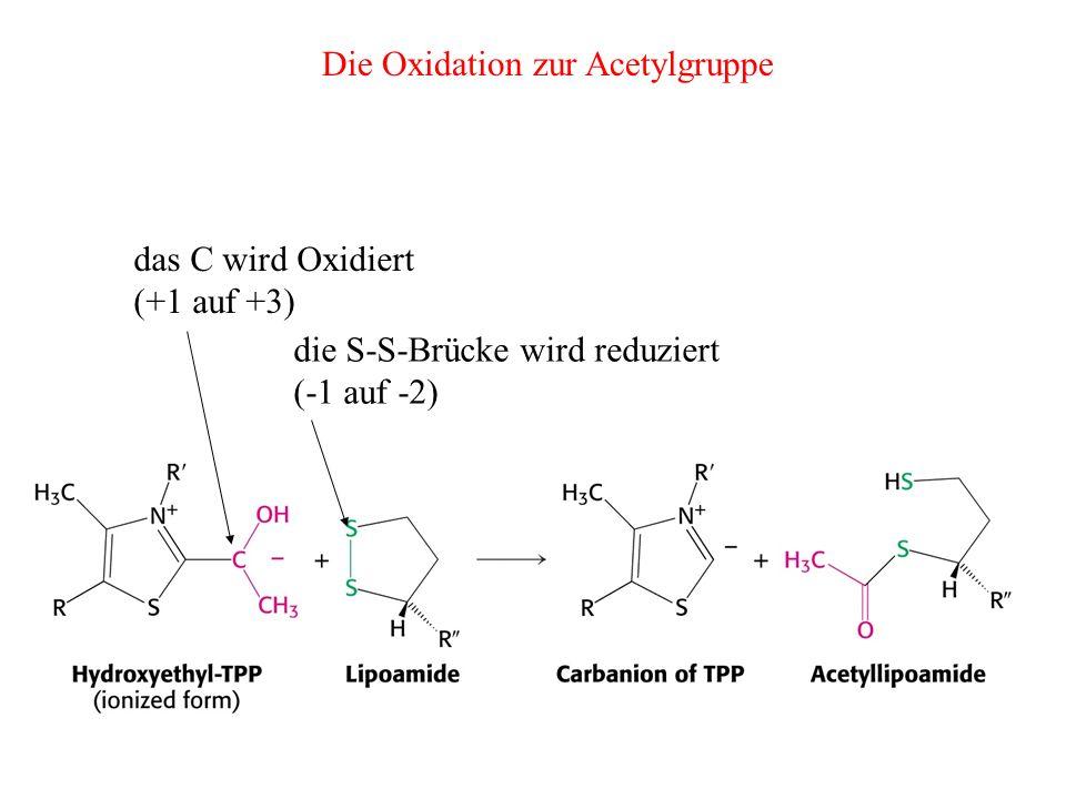 Die Oxidation zur Acetylgruppe