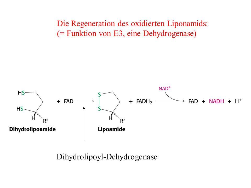 Die Regeneration des oxidierten Liponamids: