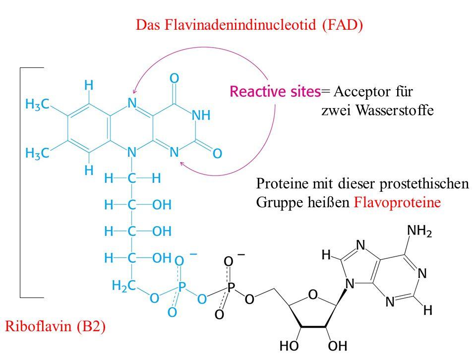 Das Flavinadenindinucleotid (FAD)
