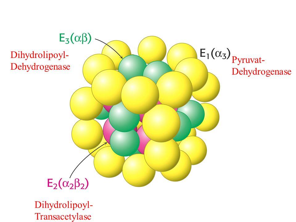 Dihydrolipoyl- Dehydrogenase Pyruvat- Dehydrogenase Dihydrolipoyl- Transacetylase