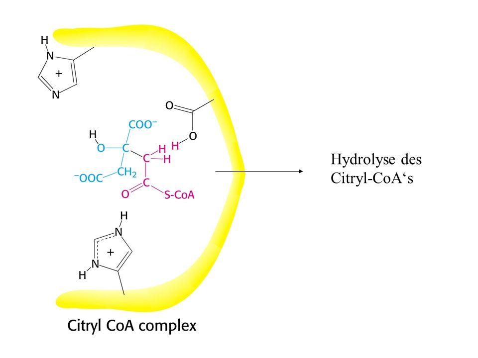 Hydrolyse des Citryl-CoA's