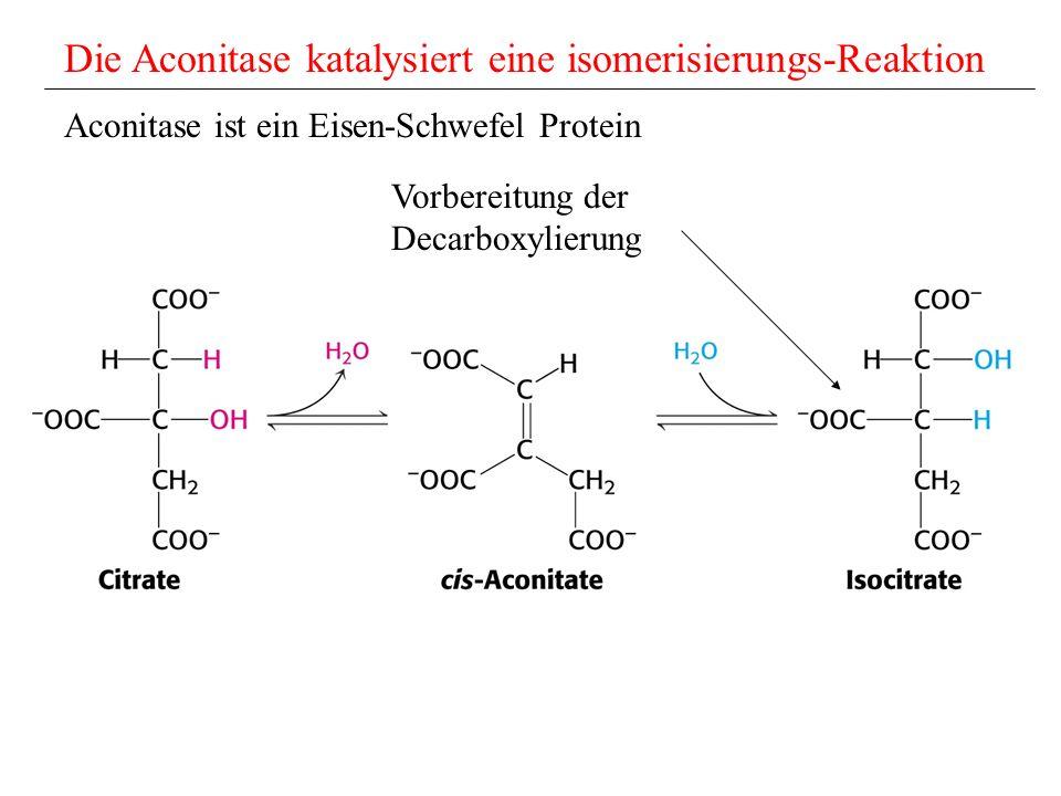 Die Aconitase katalysiert eine isomerisierungs-Reaktion