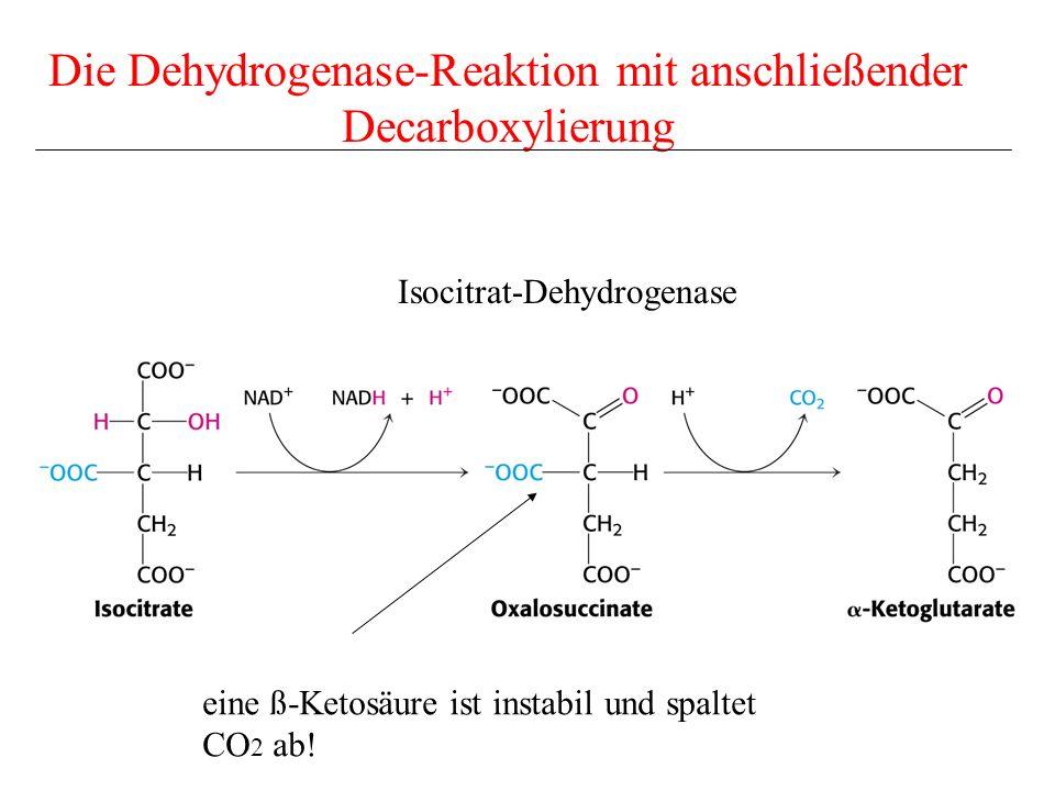 Die Dehydrogenase-Reaktion mit anschließender