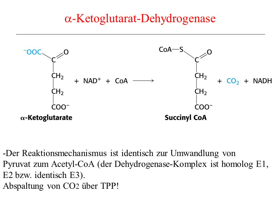 a-Ketoglutarat-Dehydrogenase