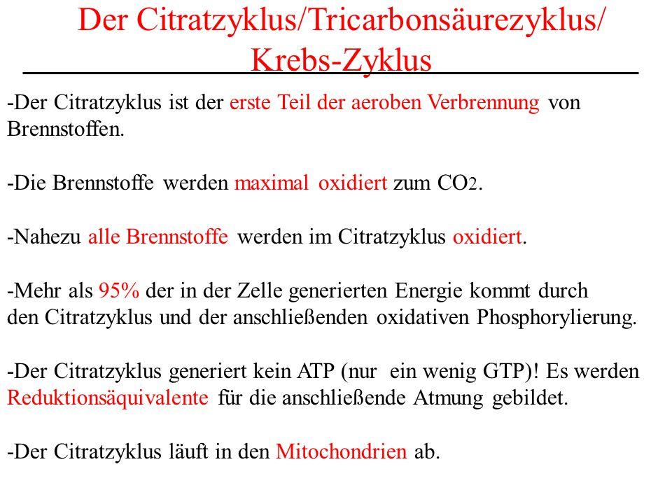 Der Citratzyklus/Tricarbonsäurezyklus/