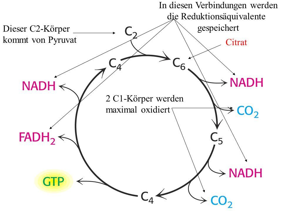 In diesen Verbindungen werden die Reduktionsäquivalente gespeichert