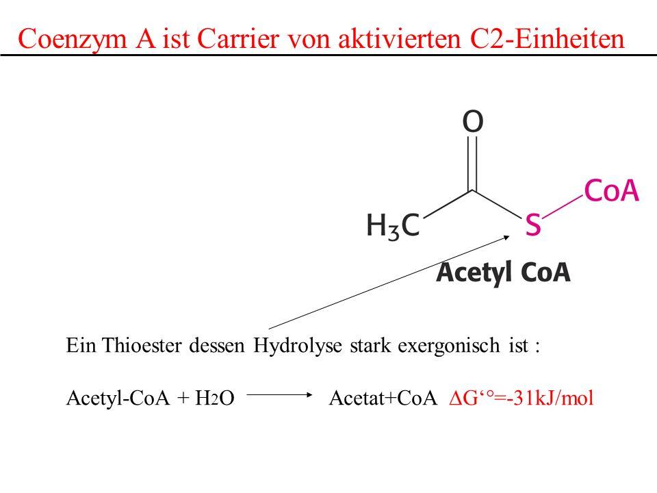 Coenzym A ist Carrier von aktivierten C2-Einheiten