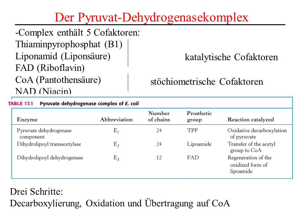 Der Pyruvat-Dehydrogenasekomplex