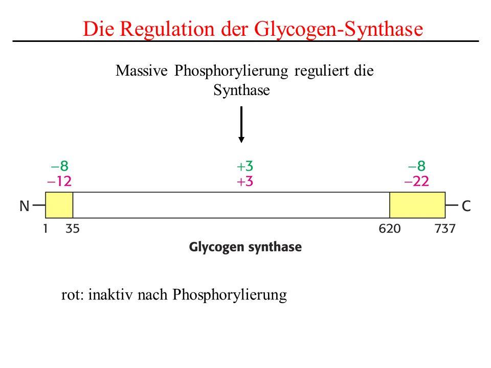 Massive Phosphorylierung reguliert die