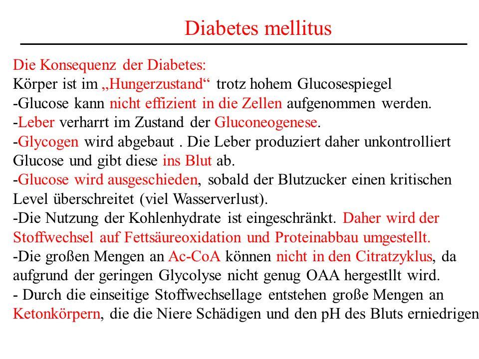 Diabetes mellitus Die Konsequenz der Diabetes: