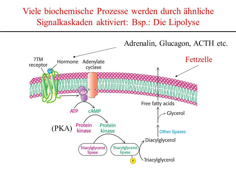 Viele biochemische Prozesse werden durch ähnliche