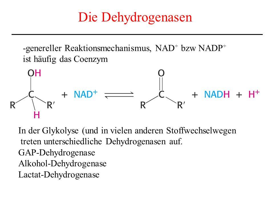 Die Dehydrogenasen -genereller Reaktionsmechanismus, NAD+ bzw NADP+
