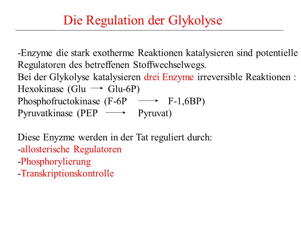 Die Regulation der Glykolyse