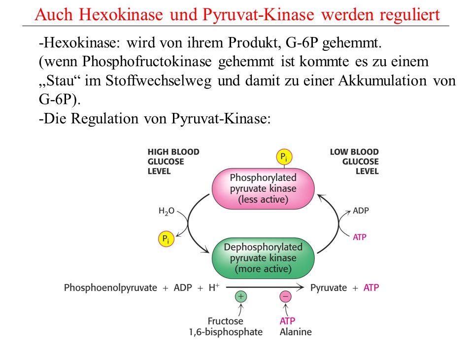 Auch Hexokinase und Pyruvat-Kinase werden reguliert