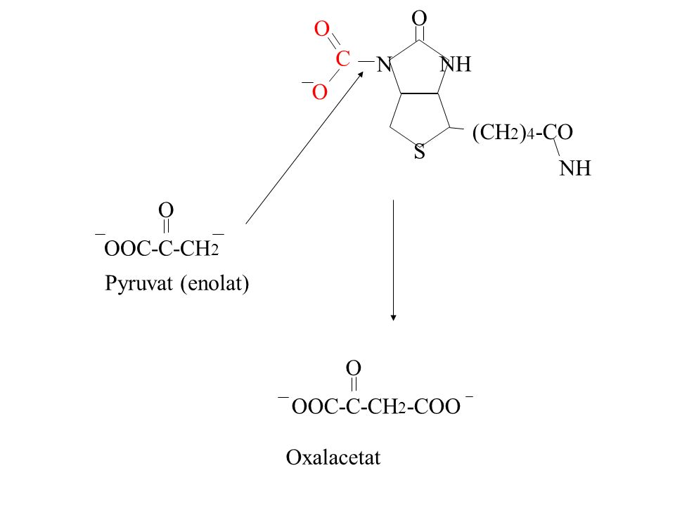 O NH N S (CH2)4-CO C O OOC-C-CH2 Pyruvat (enolat) OOC-C-CH2-COO O Oxalacetat
