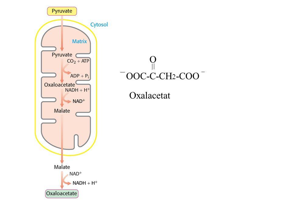OOC-C-CH2-COO O Oxalacetat