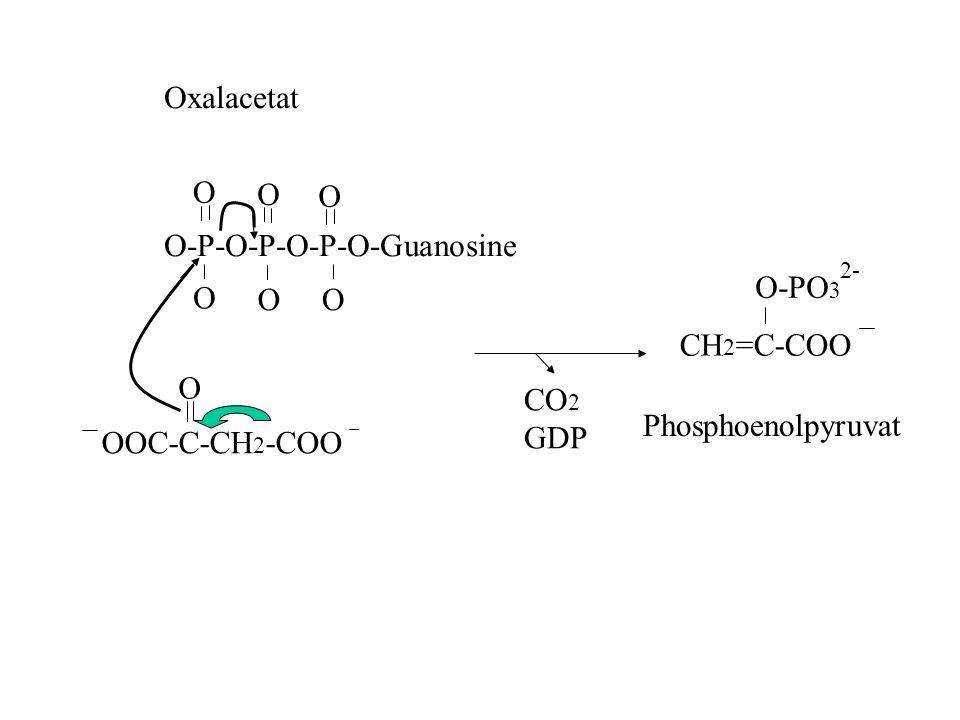 O-P-O-P-O-P-O-Guanosine O-PO3 O O O CH2=C-COO