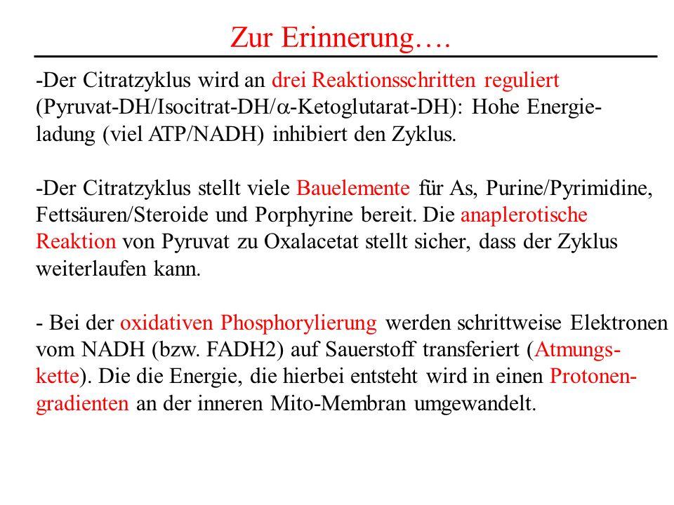 Zur Erinnerung….-Der Citratzyklus wird an drei Reaktionsschritten reguliert. (Pyruvat-DH/Isocitrat-DH/a-Ketoglutarat-DH): Hohe Energie-