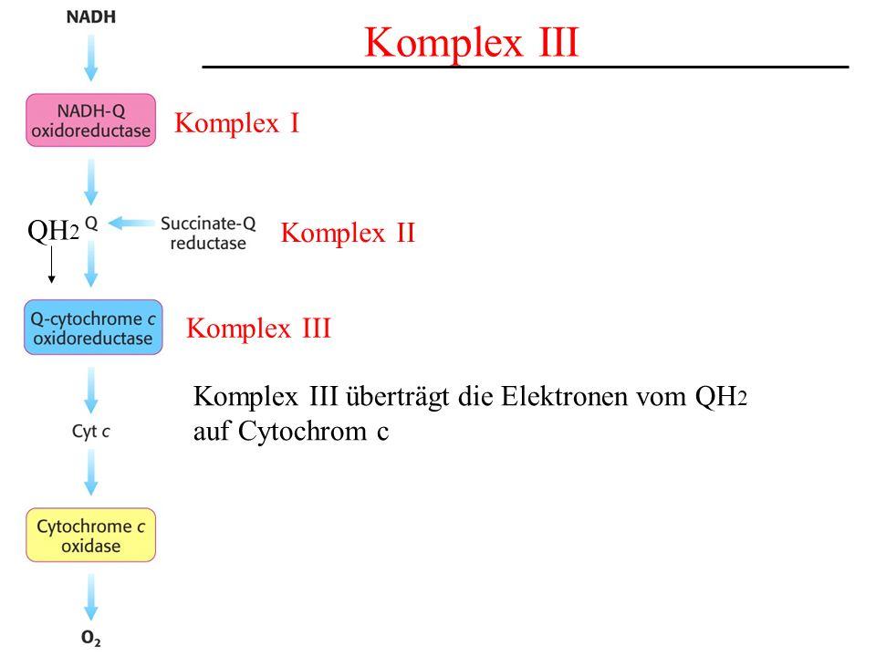 Komplex III Komplex I QH2 Komplex II Komplex III