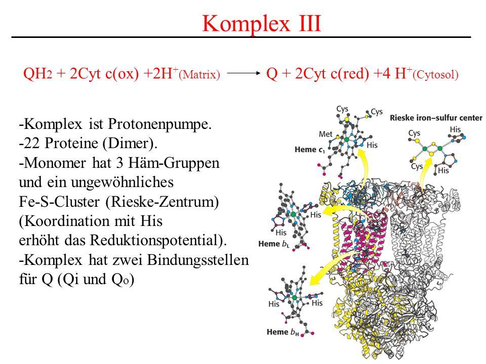Komplex III QH2 + 2Cyt c(ox) +2H+(Matrix) Q + 2Cyt c(red) +4 H+(Cytosol) -Komplex ist Protonenpumpe.