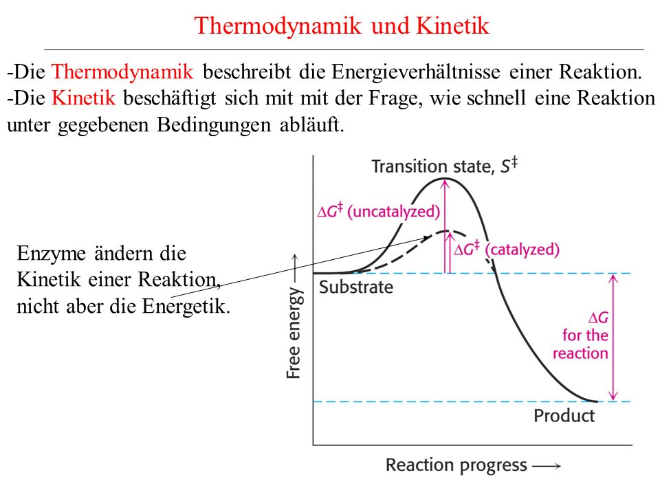 Thermodynamik und Kinetik