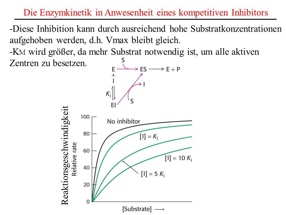 Die Enzymkinetik in Anwesenheit eines kompetitiven Inhibitors