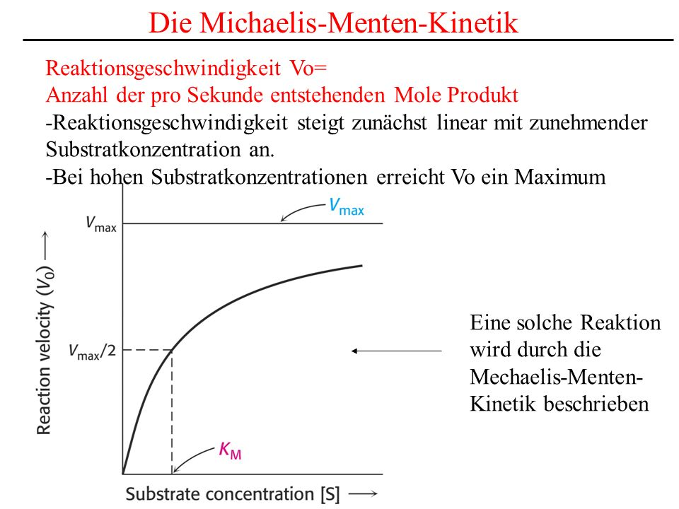 Die Michaelis-Menten-Kinetik