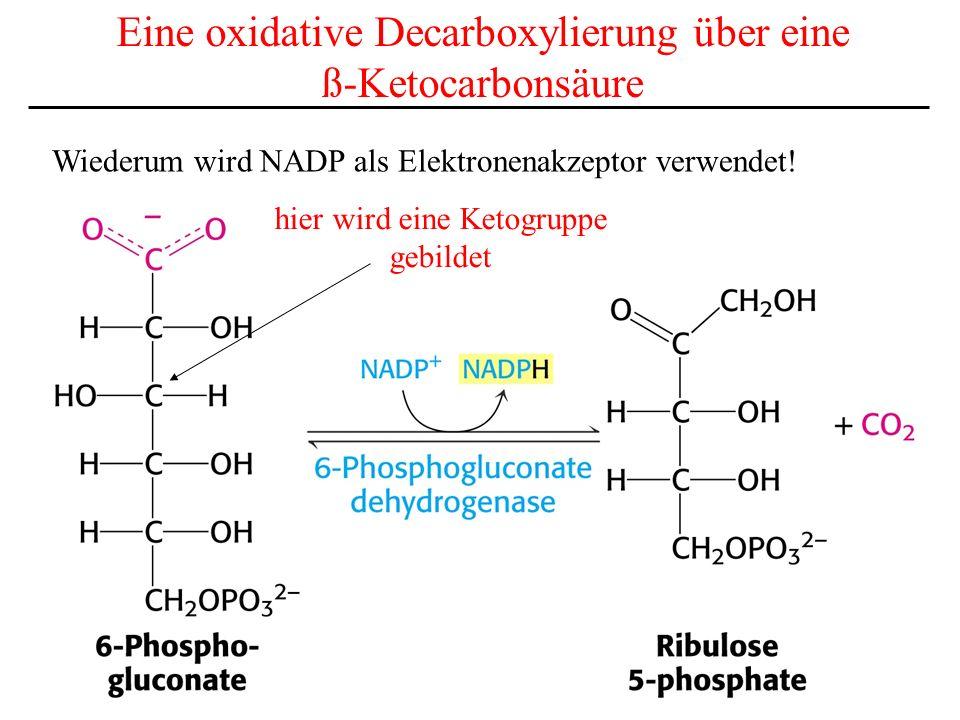 Eine oxidative Decarboxylierung über eine ß-Ketocarbonsäure