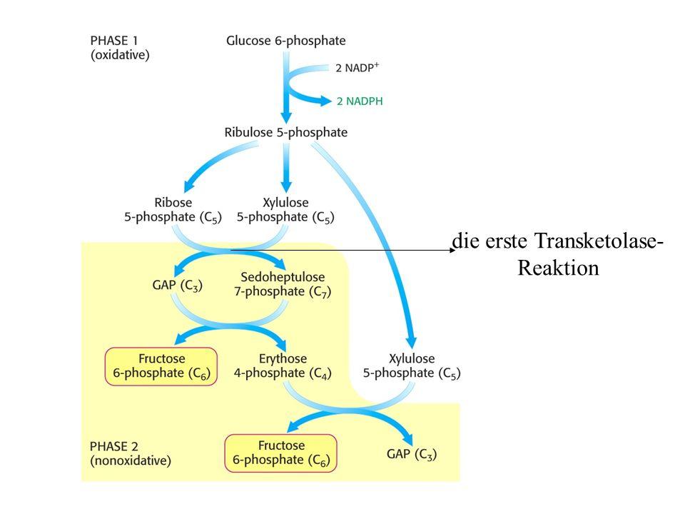 die erste Transketolase-