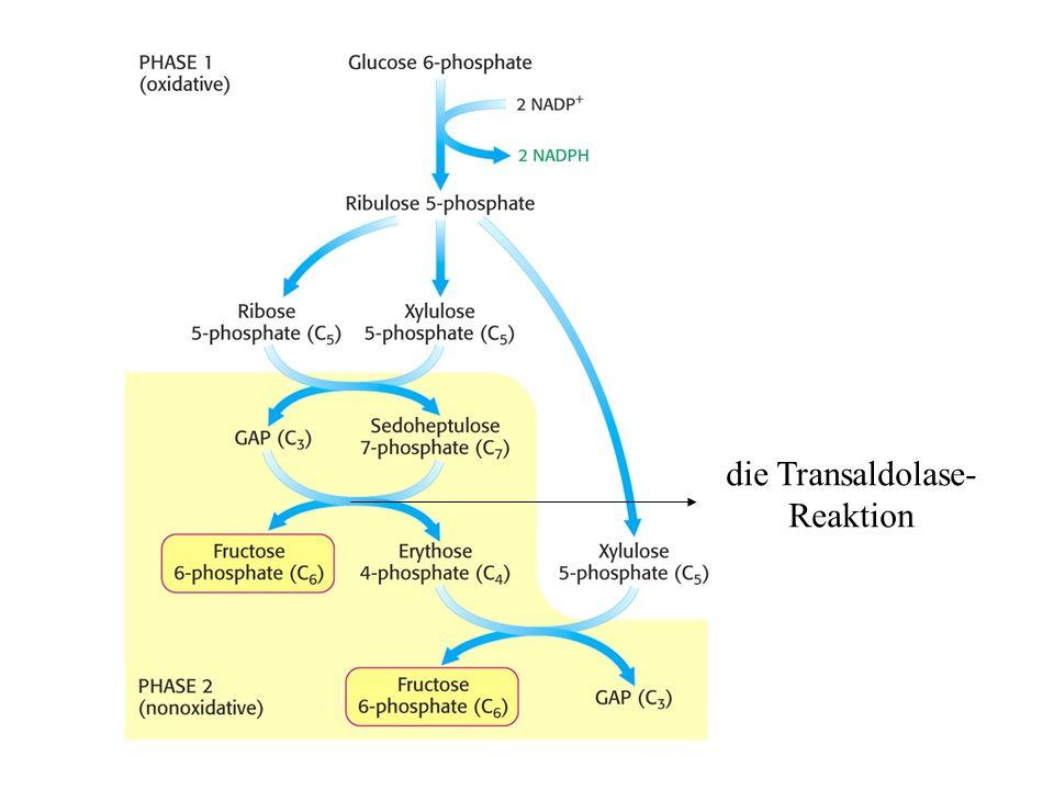 die Transaldolase- Reaktion