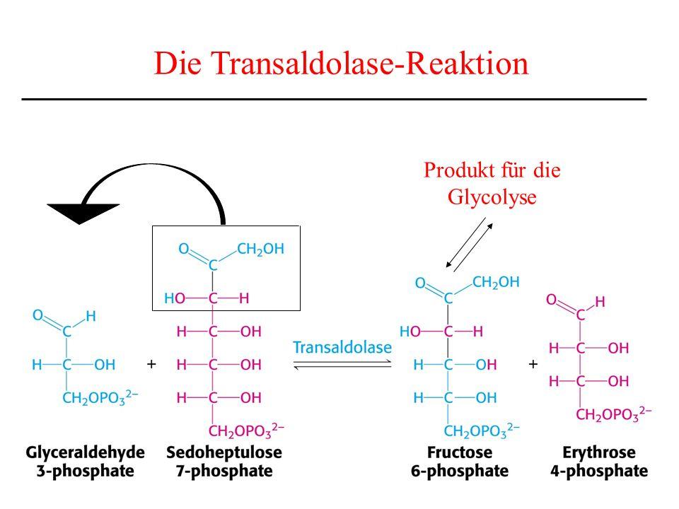 Die Transaldolase-Reaktion