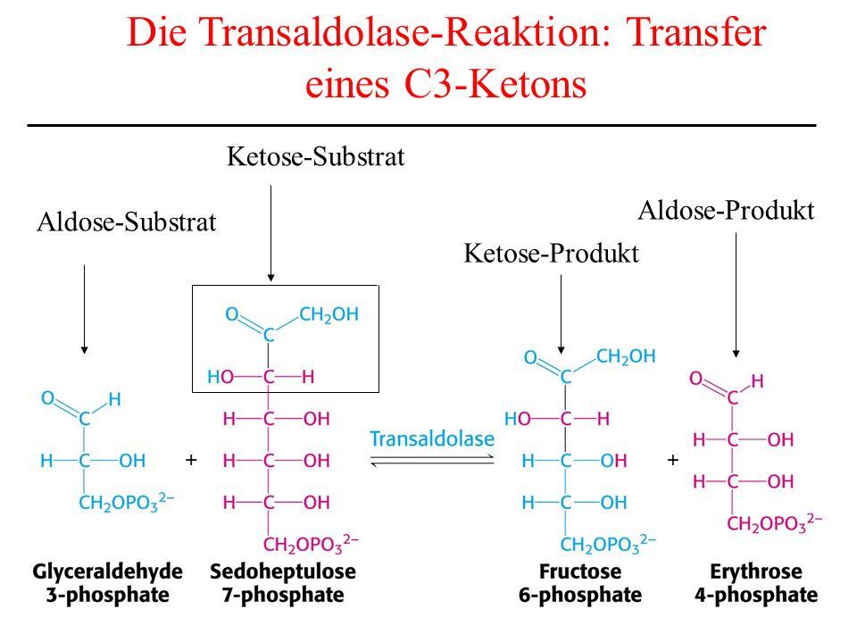 Die Transaldolase-Reaktion: Transfer