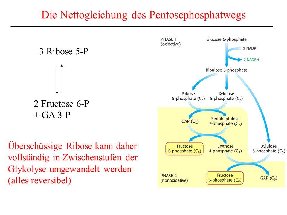 Die Nettogleichung des Pentosephosphatwegs
