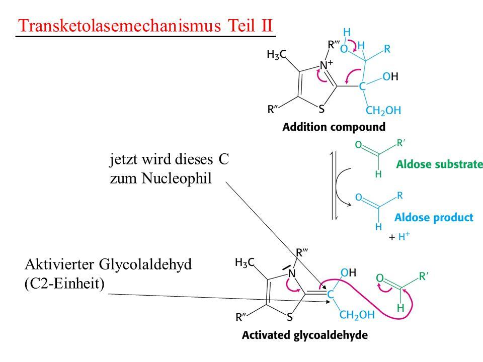 Transketolasemechanismus Teil II