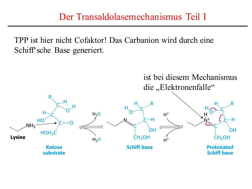 Der Transaldolasemechanismus Teil I
