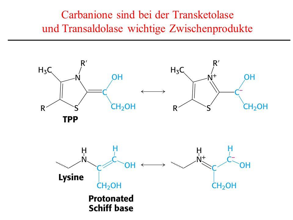 Carbanione sind bei der Transketolase