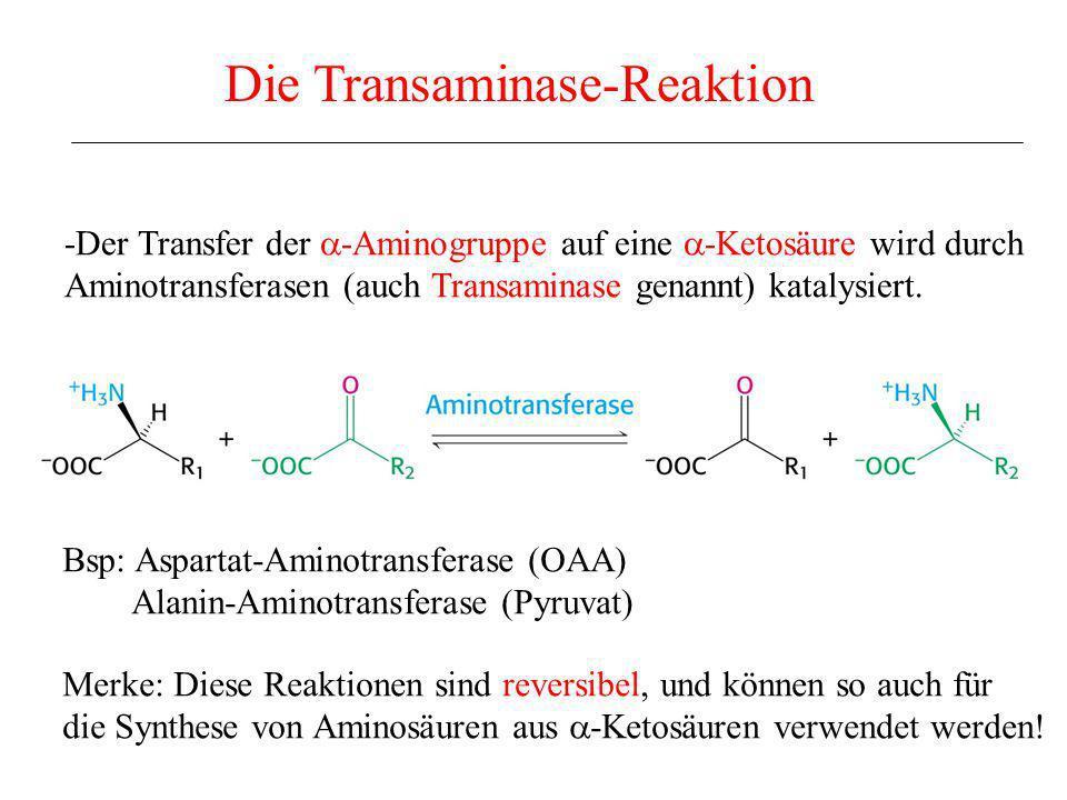 Die Transaminase-Reaktion