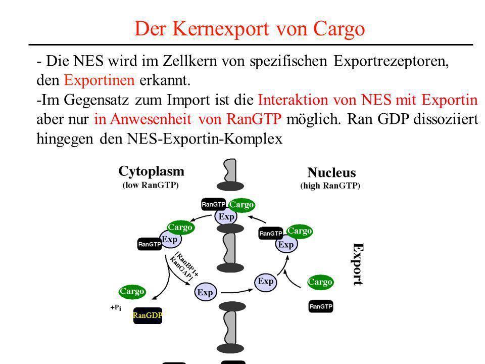 Der Kernexport von Cargo