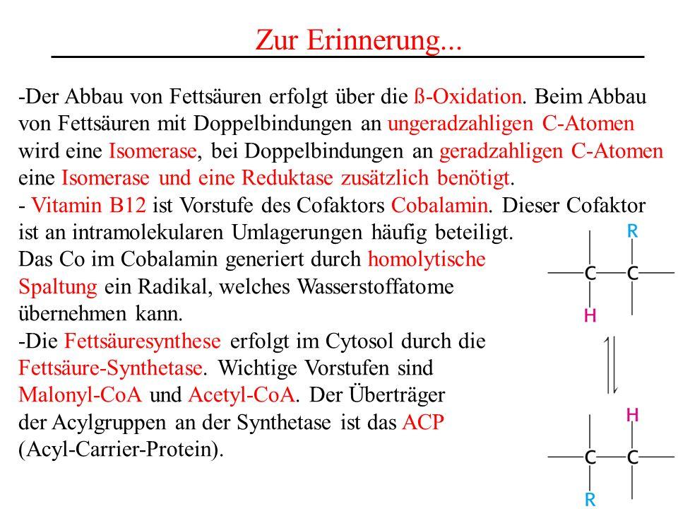 Zur Erinnerung... -Der Abbau von Fettsäuren erfolgt über die ß-Oxidation. Beim Abbau. von Fettsäuren mit Doppelbindungen an ungeradzahligen C-Atomen.