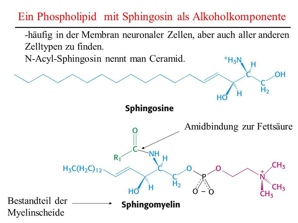 Ein Phospholipid mit Sphingosin als Alkoholkomponente