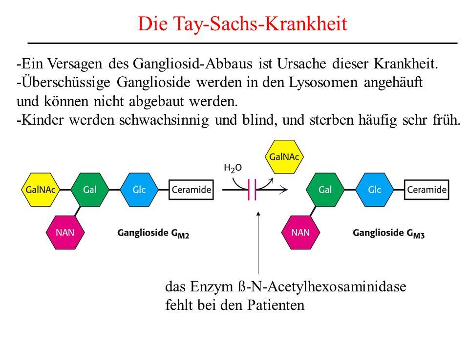 Die Tay-Sachs-Krankheit