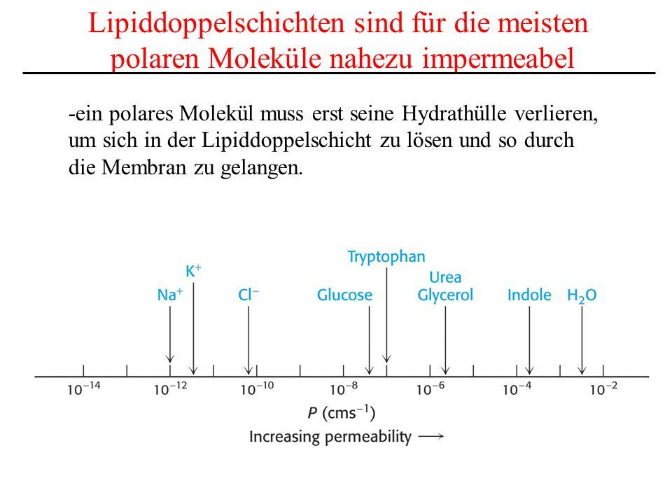 Lipiddoppelschichten sind für die meisten