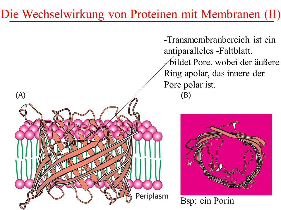 Die Wechselwirkung von Proteinen mit Membranen (II)