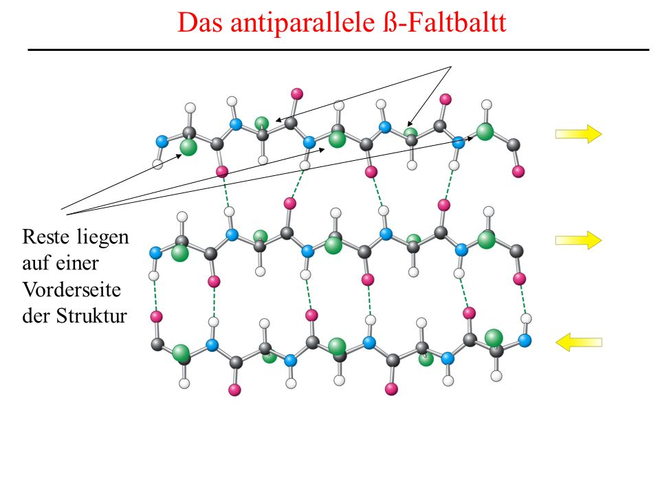 Das antiparallele ß-Faltbaltt