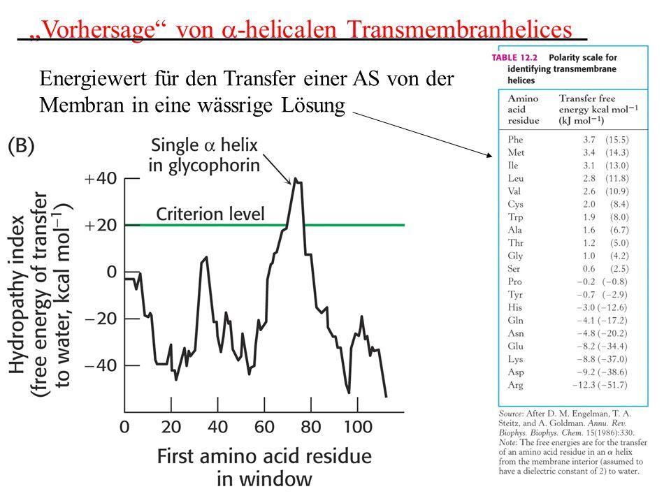 """""""Vorhersage von a-helicalen Transmembranhelices"""