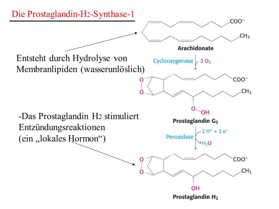 Die Prostaglandin-H2-Synthase-1
