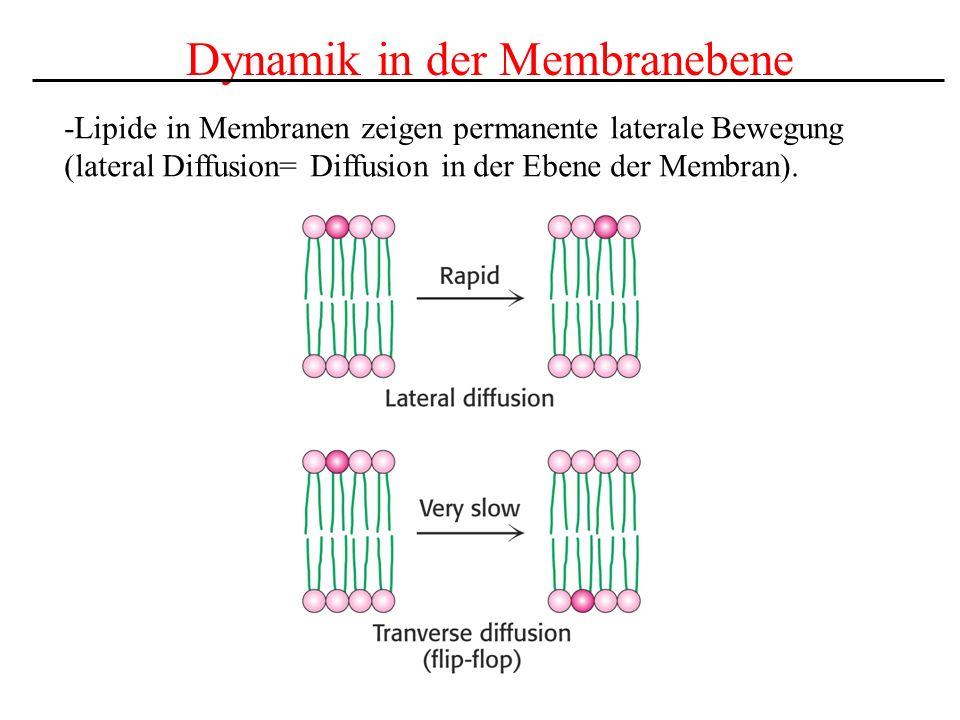 Dynamik in der Membranebene