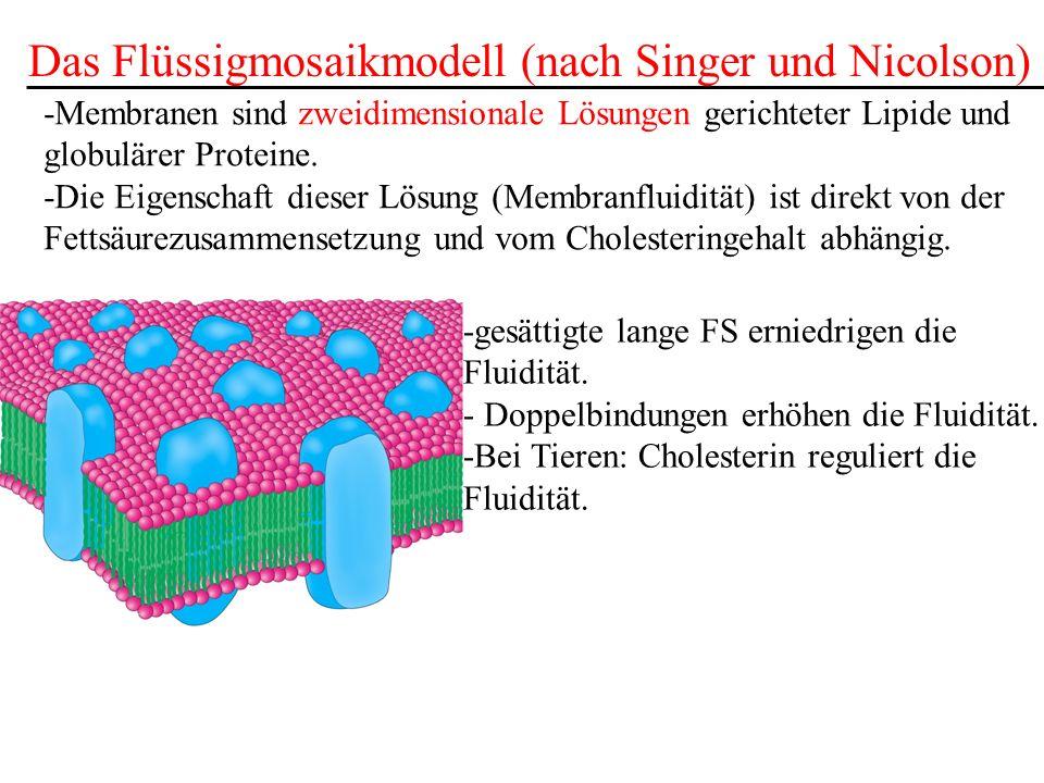 Das Flüssigmosaikmodell (nach Singer und Nicolson)