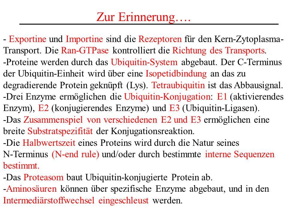 Zur Erinnerung…. - Exportine und Importine sind die Rezeptoren für den Kern-Zytoplasma-